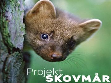 Projekt Skovmår