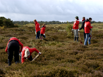 50 medarbejdere fra medicinalvirksomheden Eli Lilly hjalp til på Melby Overdrev for at være med til at give naturen en hånd, Foto: Bonnie Helgestad