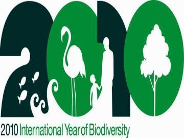 FN's internationale Biodiversitetsår