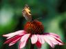 Fremtidshistorie - Natur & Biodiversitet